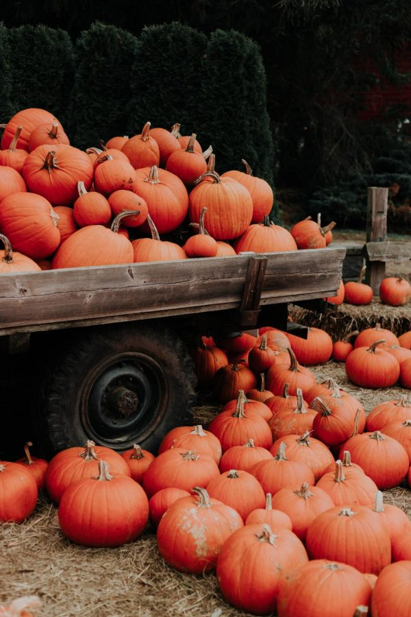7 COVID-19 Friendly Fall Activities